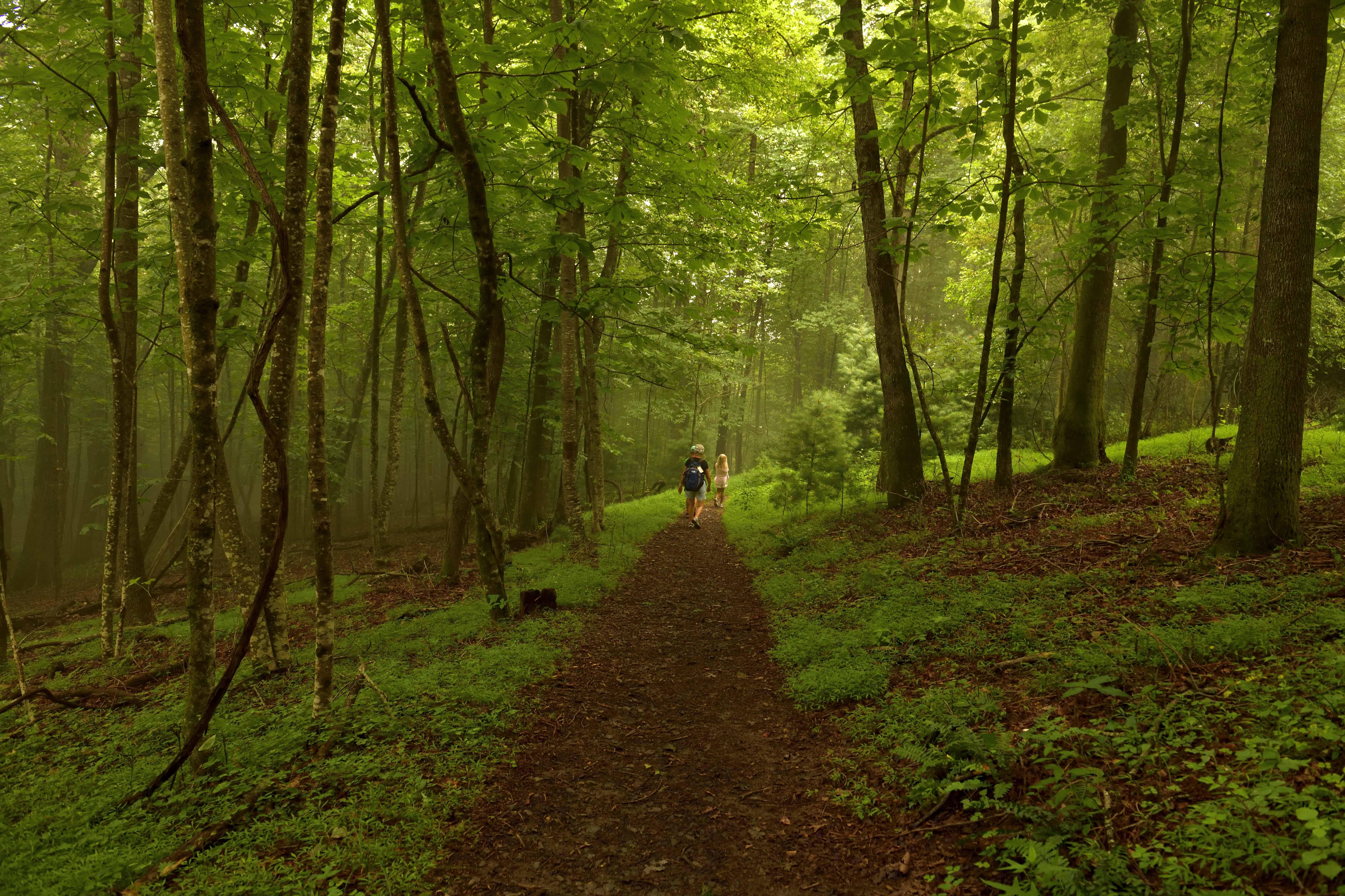Gully Creek Trail