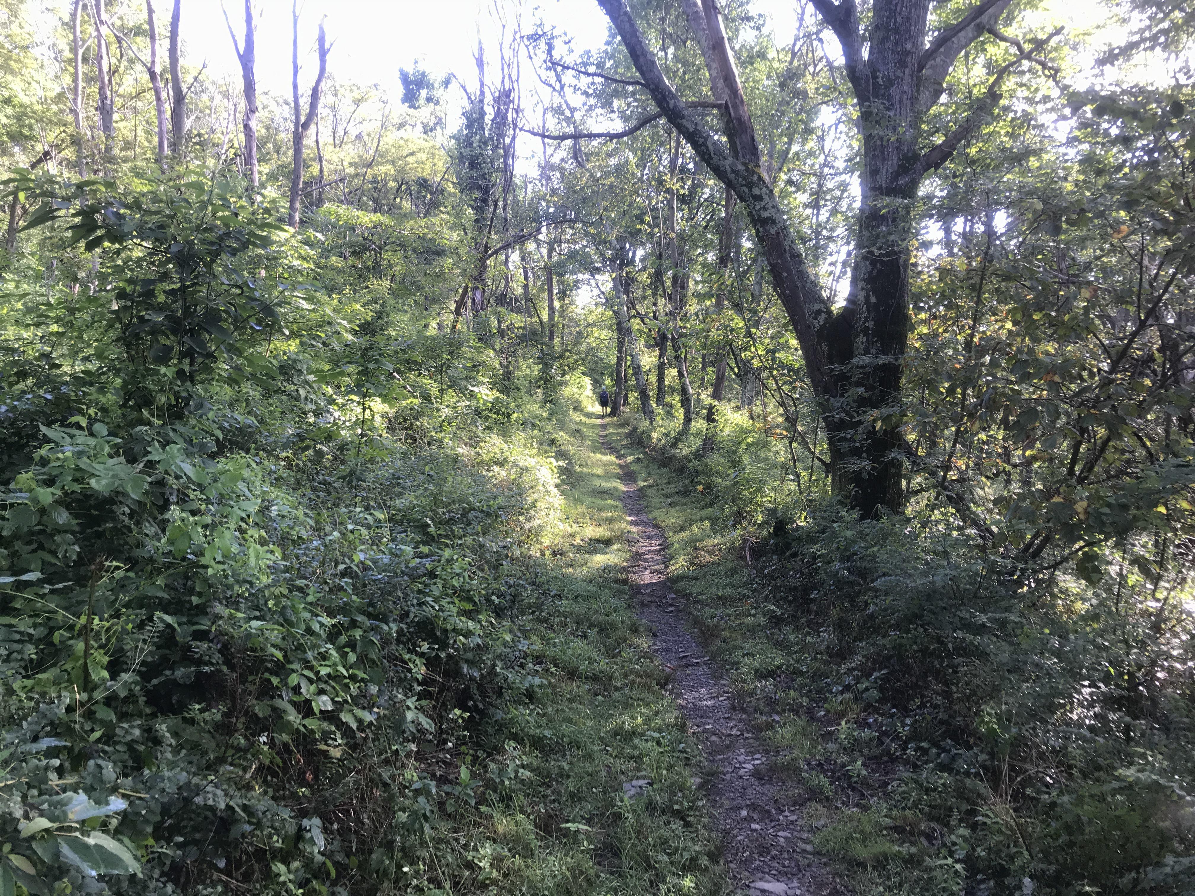 Hike The Appalachian Trail to Ivy Creek