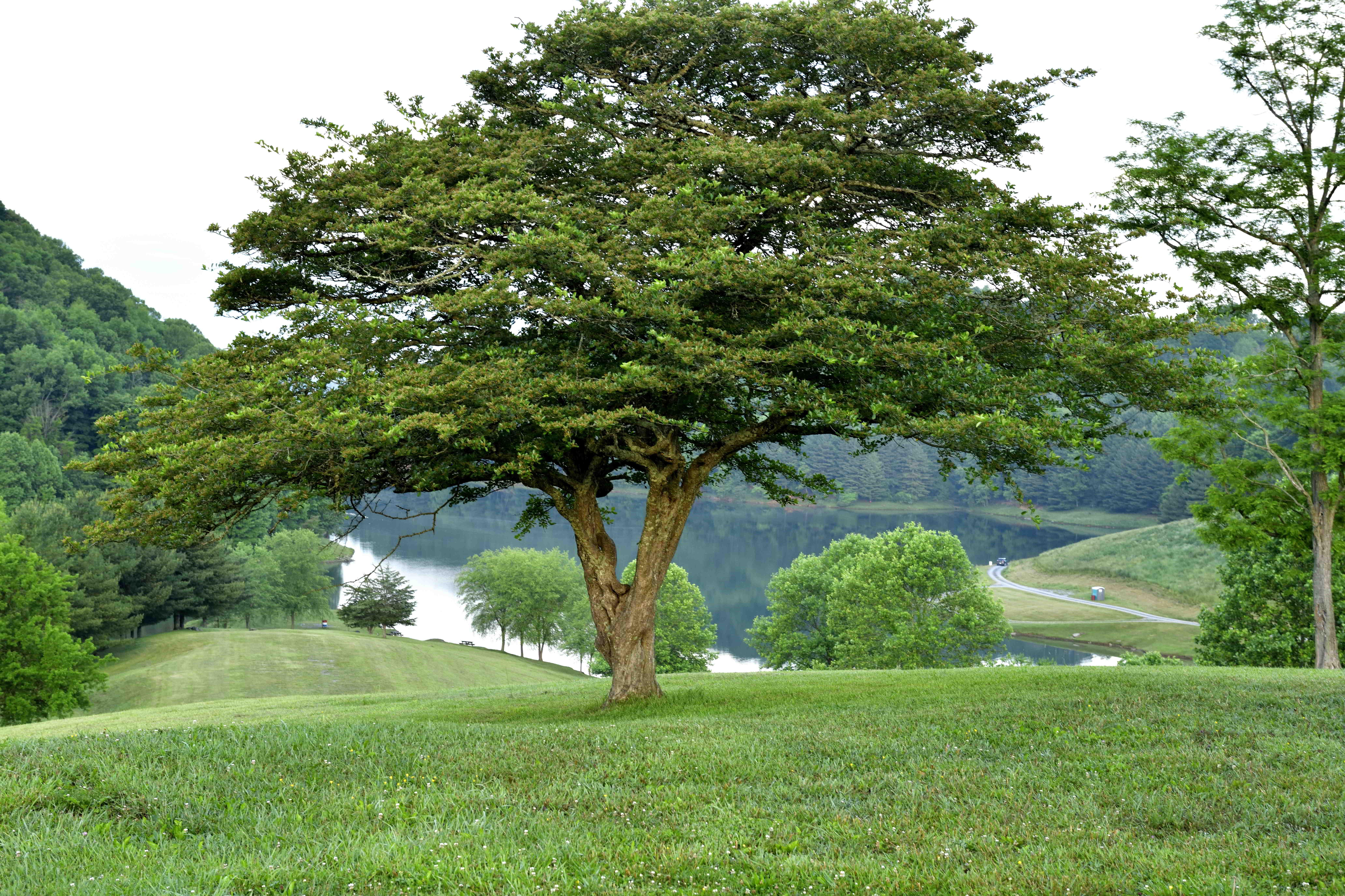 Cavitt's Creek Park, North Tazewell, Virginia
